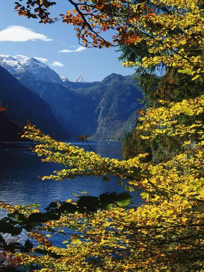 Autumn Foliage Scenic with River View, Berchtesgaden National Park-Norbert Rosing-Photographic Print