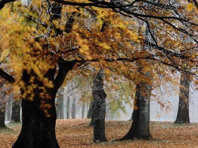 https://imgc.artprintimages.com/img/print/autumn-foliage_u-l-p4u99f0.jpg?p=0
