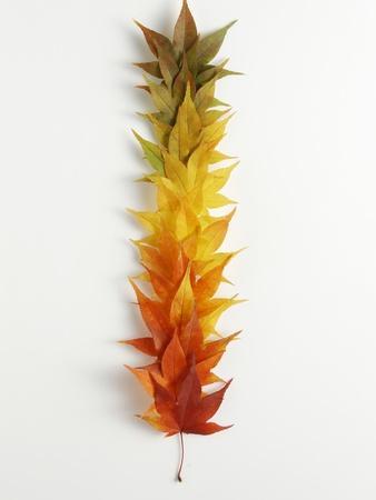 https://imgc.artprintimages.com/img/print/autumn-foliage_u-l-pzlhsi0.jpg?p=0