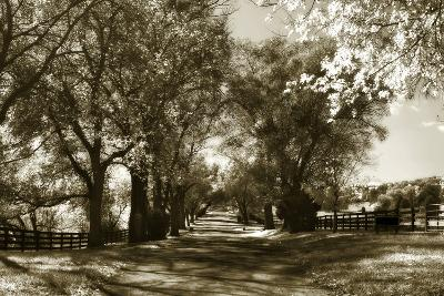 Autumn Foothills 6-Alan Hausenflock-Photographic Print