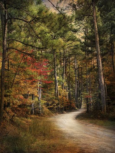 Autumn Forest 2-Jai Johnson-Photographic Print