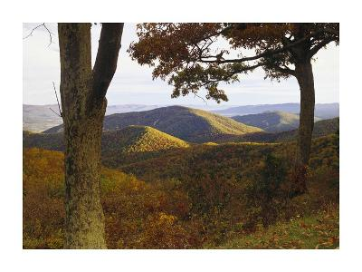 Autumn forest at Brown Mountain, Shenandoah National Park, Virginia-Tim Fitzharris-Art Print