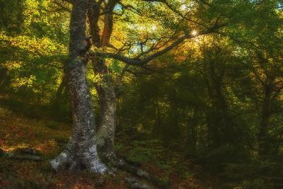 Autumn Forest in the Mountains-Andrey Dushankin-Photographic Print