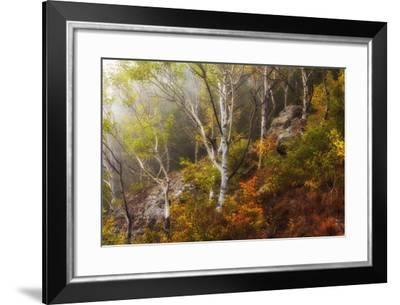 Autumn Forest in the Mountains-Andrey Dushankin-Framed Photographic Print