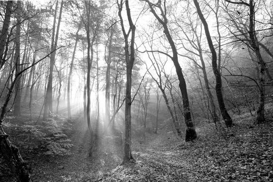 Autumn Forest With Fog And Lights-udvarhazi-Photographic Print