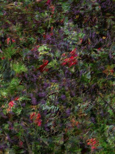Autumn Fruits-Doug Chinnery-Photographic Print