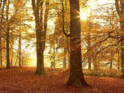 Autumn Glory-Doug Chinnery-Photographic Print