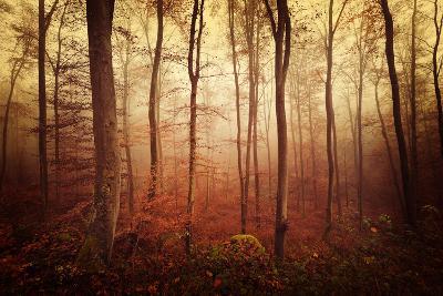 Autumn gradation-Philippe Sainte-Laudy-Photographic Print