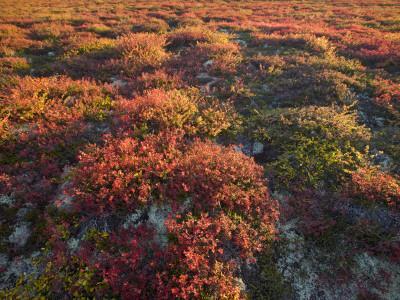 Autumn-Hued Tundra of Kronotsky Nature Reserve-Michael Melford-Photographic Print