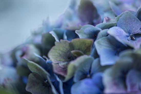 Autumn Hydrangea IV-Rita Crane-Photographic Print