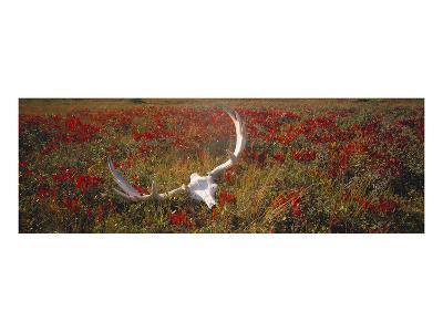 Autumn in Gros Morne National Park, Newfoundland, Canada--Art Print