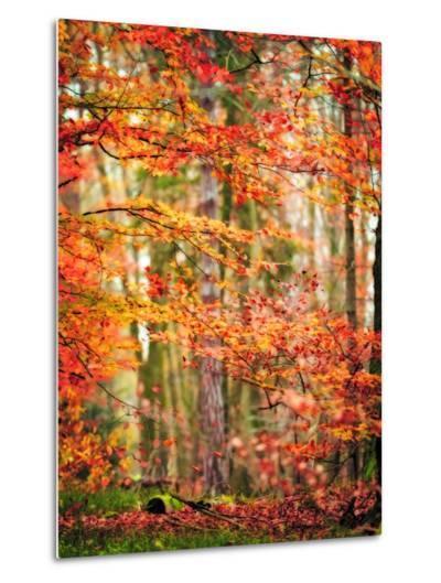 Autumn in New Haven-Philippe Sainte-Laudy-Metal Print