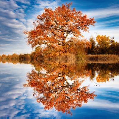 https://imgc.artprintimages.com/img/print/autumn-in-the-reflection_u-l-q1gvvle0.jpg?p=0