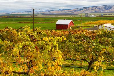 Autumn in Walla Walla Wine Country, Walla Walla, Washington, USA-Richard Duval-Photographic Print