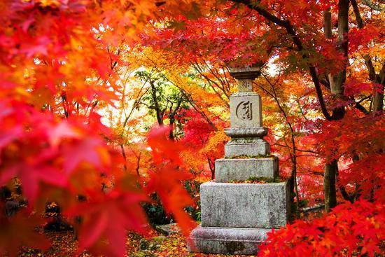 Autumn Japanese Garden with Maple-NicholasHan-Photographic Print