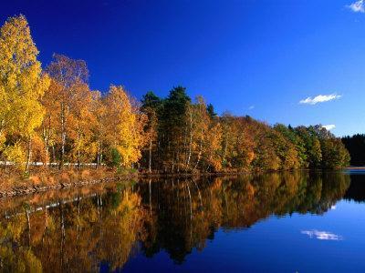 https://imgc.artprintimages.com/img/print/autumn-lakeside-trees-halland-sweden_u-l-p4cu1y0.jpg?p=0