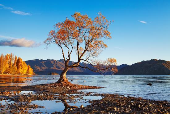 Autumn Landscape, Lake Wanaka, New Zealand-DmitryP-Photographic Print