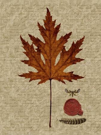https://imgc.artprintimages.com/img/print/autumn-leaf-i_u-l-q1a09xq0.jpg?p=0