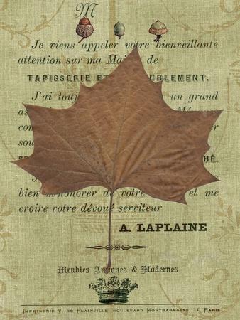 https://imgc.artprintimages.com/img/print/autumn-leaf-ii_u-l-q1a0a7t0.jpg?p=0