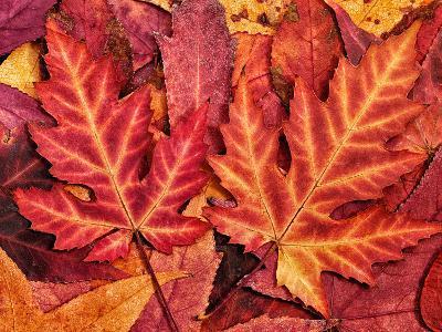 Autumn Leaf-Grab My Art-Art Print