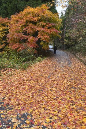 Autumn Leaves Along the Old Nakasendo Highway, Magome, Kiso Valley Nakasendo, Central Honshu, Japan-Stuart Black-Photographic Print