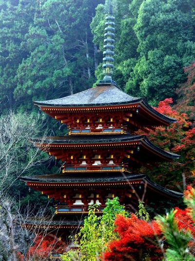 Autumn Leaves at Hase Temple--Photographic Print