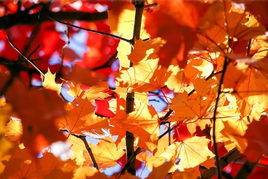 Autumn Leaves Background-Nikolay Etsyukevich-Photographic Print