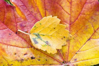Autumn Leaves, Close-Up-Frank Lukasseck-Photographic Print