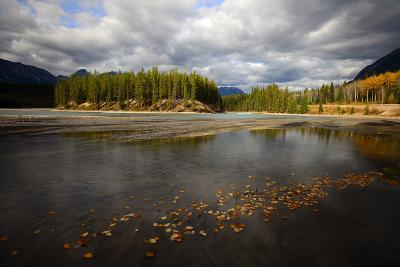 Autumn Leaves Floating on Athabasca River in Alberta, Canada-Raul Touzon-Photographic Print