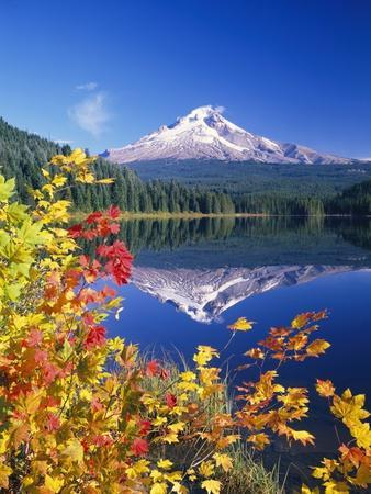 https://imgc.artprintimages.com/img/print/autumn-leaves-growing-near-mount-hood-and-trillium-lake_u-l-pzlws90.jpg?p=0