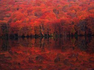 Autumn Leaves in Tutanuma