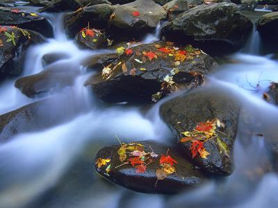 Autumn Leaves on Wet Boulders in Stream, Great Smoky Mountains National Park, North Carolina-Tim Fitzharris/ Minden Pictures-Photographic Print