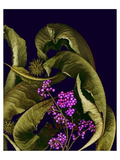Autumn leaves purple--Art Print