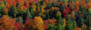 Autumn Leaves Vermont USA