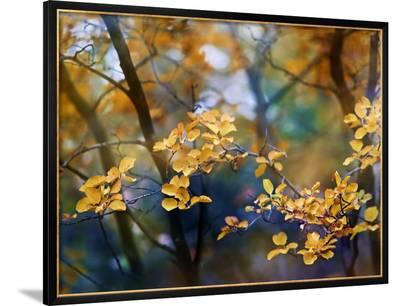 Autumn Leaves-Ursula Abresch-Framed Photographic Print