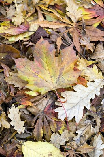 Autumn Leaves-Jon Stokes-Photographic Print