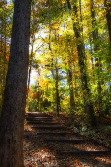 Autumn Light II-Alan Hausenflock-Photographic Print