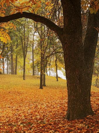 https://imgc.artprintimages.com/img/print/autumn-manito-park-spokane-washington-usa_u-l-p84q460.jpg?p=0