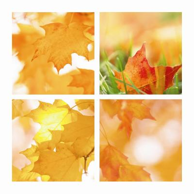 Autumn Maple Leaves Four Patch--Art Print