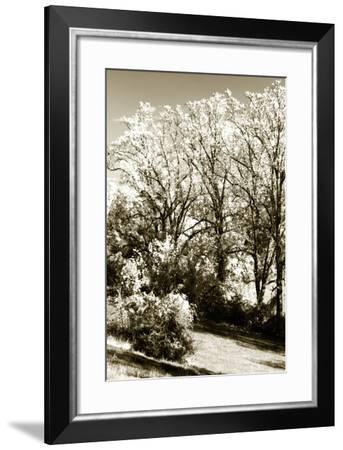 Autumn Meadow 2-Alan Hausenflock-Framed Photographic Print