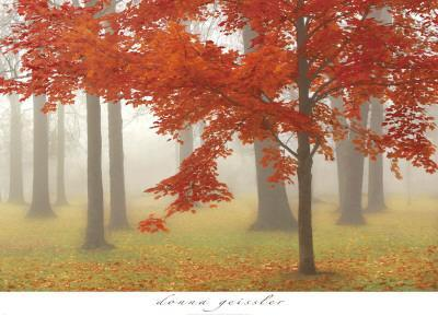 https://imgc.artprintimages.com/img/print/autumn-mist-ii_u-l-f50e5x0.jpg?p=0