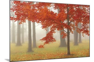 Autumn Mist II-Donna Geissler-Mounted Print
