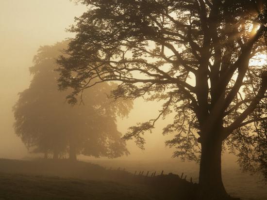 Autumn Morning, Near Dryman, Stirling, Scotland--Photographic Print