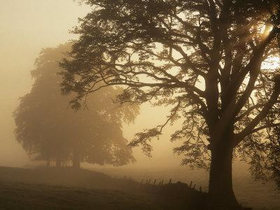 https://imgc.artprintimages.com/img/print/autumn-morning-near-dryman-stirling-scotland_u-l-q10x3yz0.jpg?p=0
