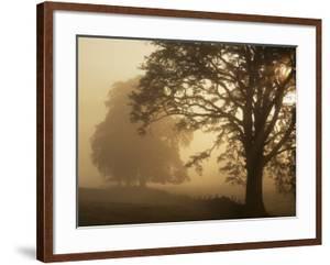 Autumn Morning, Near Dryman, Stirling, Scotland
