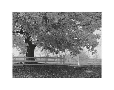 https://imgc.artprintimages.com/img/print/autumn-morning_u-l-f8c8ir0.jpg?p=0