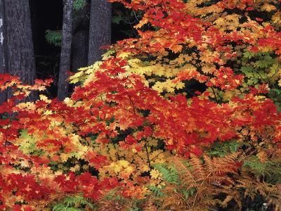Autumn, Mt Baker Snoqualmie National Forest, Snoqualmie Pass, Washington, USA-Stuart Westmorland-Photographic Print