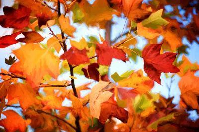 Autumn Paintography-Philippe Sainte-Laudy-Photographic Print