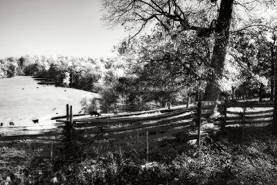Autumn Pastures II-Alan Hausenflock-Photographic Print