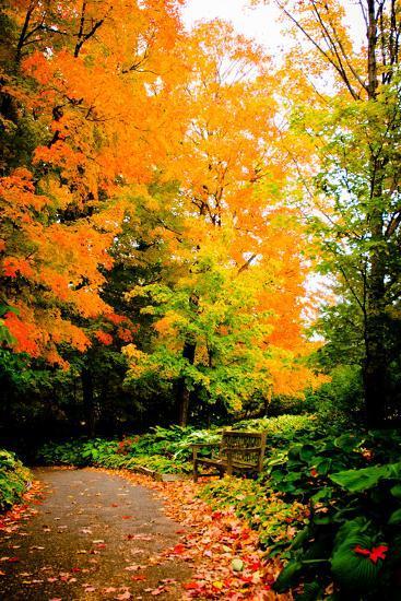 Autumn Pathway III-Beth Wold-Photographic Print